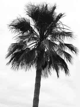 Palme im Wind von Suzanne de Jong
