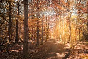 Magisch bos van
