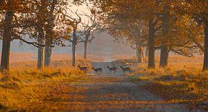 Hertjes in de ochtend van Ans Bastiaanssen