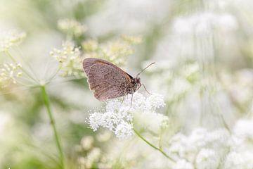 Brauner Flussuferläufer Schmetterling auf der blühenden Kuh-Petersilie von KB Design & Photography (Karen Brouwer)