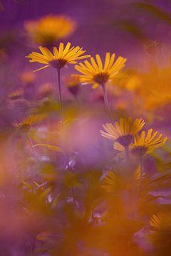 Gelbe Stimmung von Hiske Boon