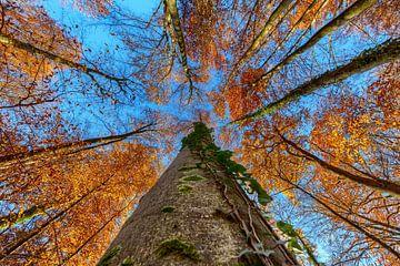 Zicht naar boven in het herfstbos van Uwe Ulrich Grün