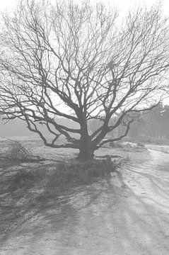 Levensboom von Victor van Galen