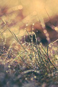 Reflecterend zomers ochtend dauw