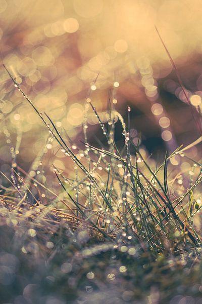 Reflecterend zomers ochtend dauw van Robert Wiggers