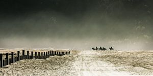 Riding the sea of sand