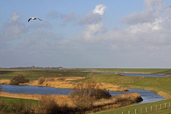 Polder Wagelot op Texel van Antwan Janssen