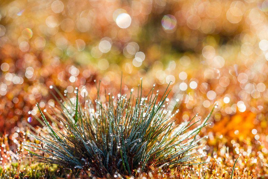 Schitterend Gras