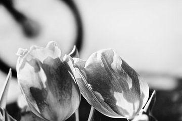 Tulpen und Fahrräder in Amsterdam von Marianna Pobedimova