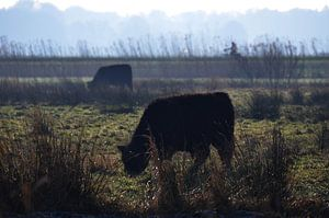 Nederland - natuurmonumenten van