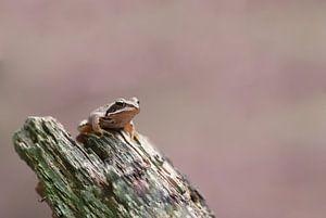 Bruine kikker op stukje hout
