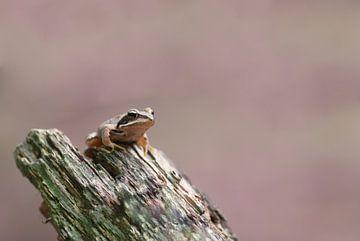 Bruine kikker op stukje hout sur Bas Mandos