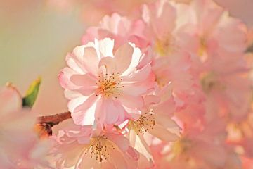 Traumblüten van Renate Dohr