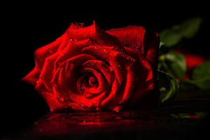 Single rose van