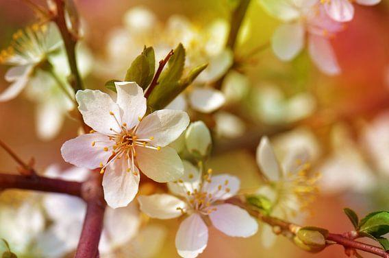 Frühlingsblüten  van Violetta Honkisz