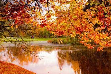 Onder de boom van Catching Colors