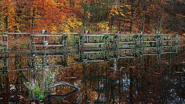 Herfst in het Waterloopbos nabij Marknesse van R Smallenbroek