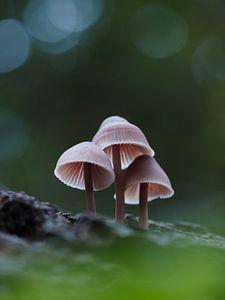 Des champignons dans une forêt