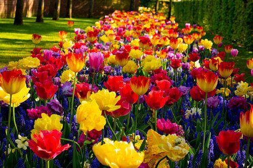 Bloemenfeestje in de tuin