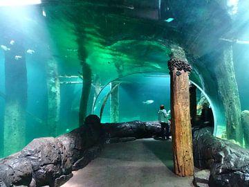 Aquarium3 van