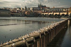 LOST IN PRAGUE 2019-50