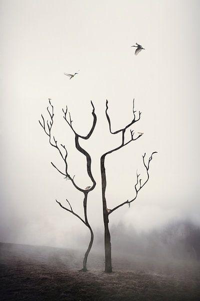 A couple of trees sur Elianne van Turennout
