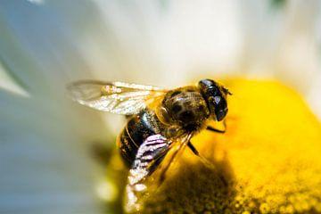 Bij - Bee van Dave De Klerk