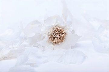 Garlic , so  beautiful van Willy Sybesma