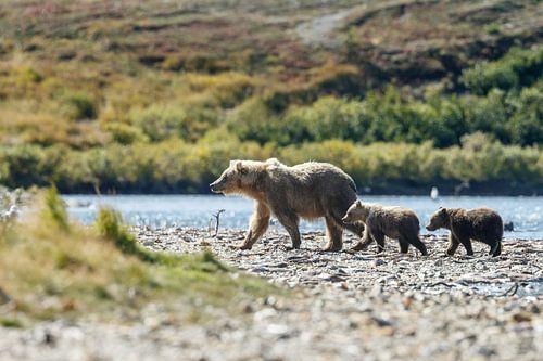 Grizzly beer en haar twee welpen van