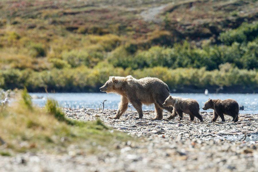 Grizzly beer en haar twee welpen
