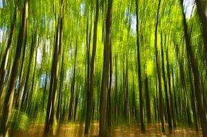 stralende bomen van Steffi Hommel
