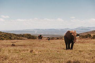 Die afrikanische Savanne mit diesen wunderschönen Elefanten in der Hauptrolle. von Floor Bogaerts