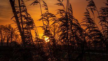 orangefarbener Sonnenaufgang von Miranda Heemskerk