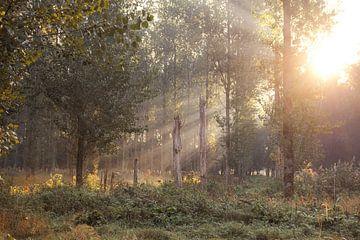 Zonnestralen in het Leeuwarder bos