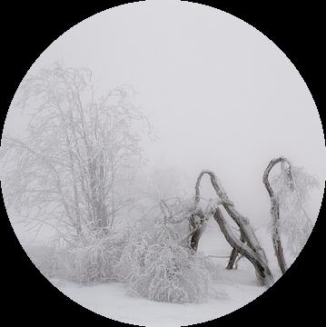 Winter wonderland van Erwin Stevens