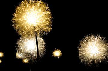 Licht in de duisternis von Bram Claassen