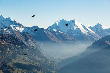 Vol d'oiseaux à travers les Alpes suisses sur