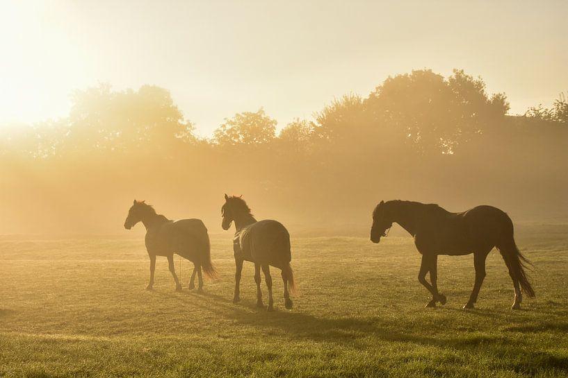Horses in the Golden Fog sur Charlene van Koesveld