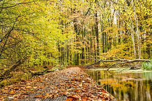 Plankier in het bos van Frans Blok