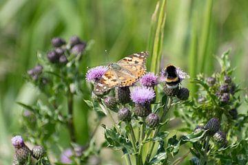 Hummel und Schmetterling auf Mariendistel von Mirjam Welleweerd