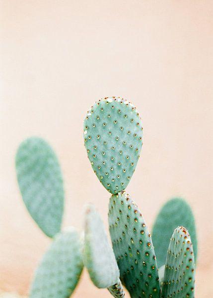 Cactus print | Perfect voor in een botanisch interieur | Groen en zacht oranje | Pastel foto print v van Raisa Zwart