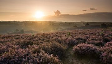 Sunrise over fields of heather sur Raoul Baart