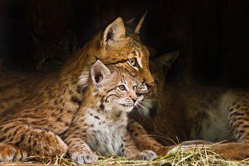lynx moeder (grote kat) speelt met een schattig klein lynx poesje, vriendelijk en lief. van Michael Semenov