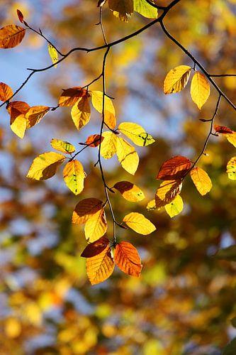 golden fall I