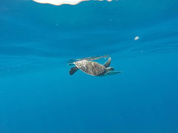 Zeeschildpad net onder het oppervlak