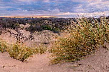 Zonsopkomst in Meijendel met zicht op duinen en helmgras van Gijs Rijsdijk