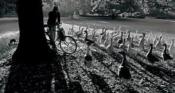 goedemorgen park clingendael van Edwin van Laer