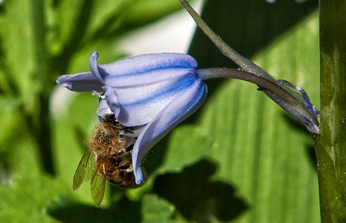 Honing komt eraan van