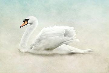 Witte Zwaan In Mooie Wit, Beige En Blauwe Pastelkleuren van Diana van Tankeren