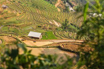 Blick über die Reisfelder Vietnams von Dokra Fotografie